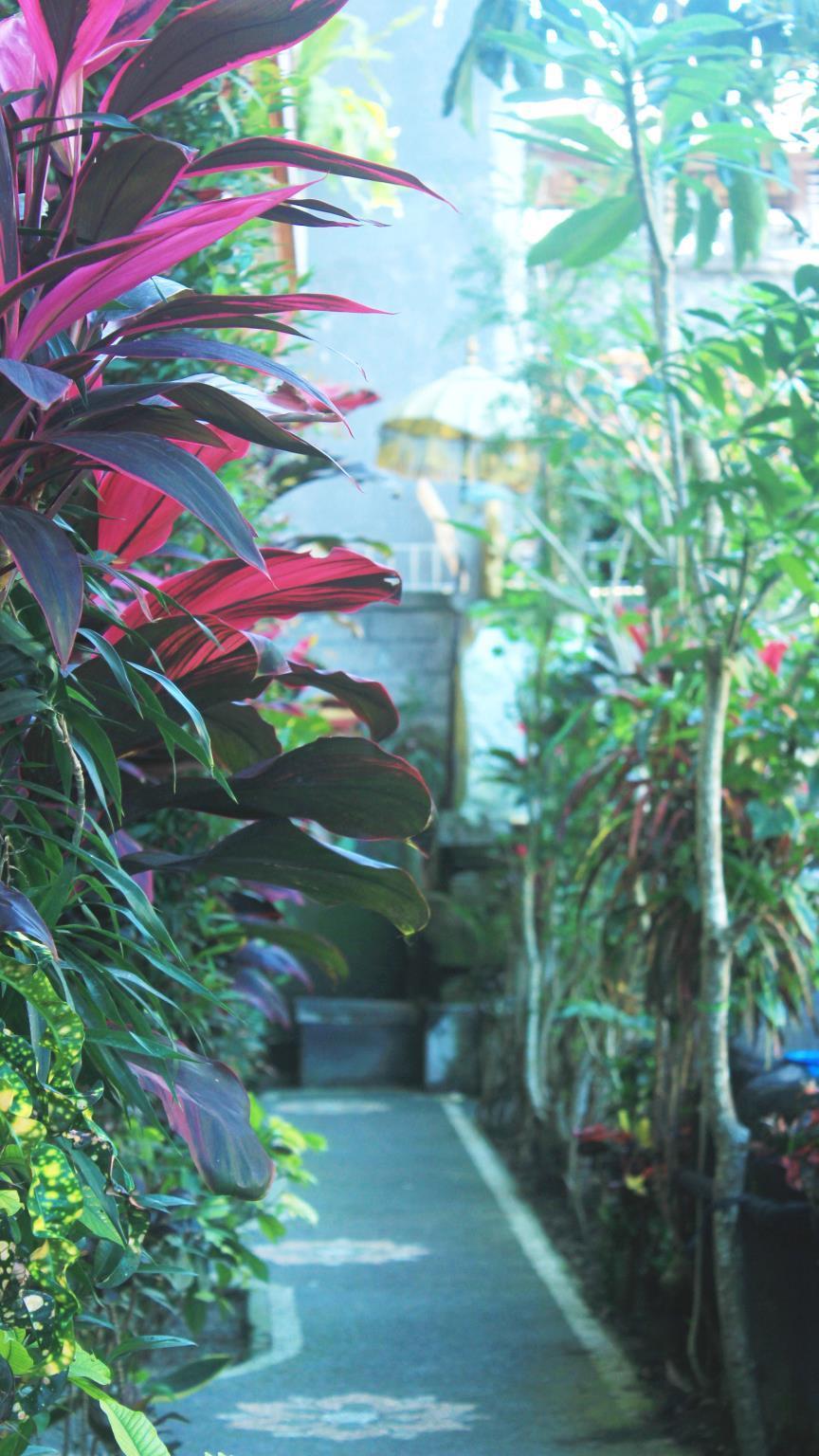 Sunari Guest House & Painter Ubud ホテル詳細