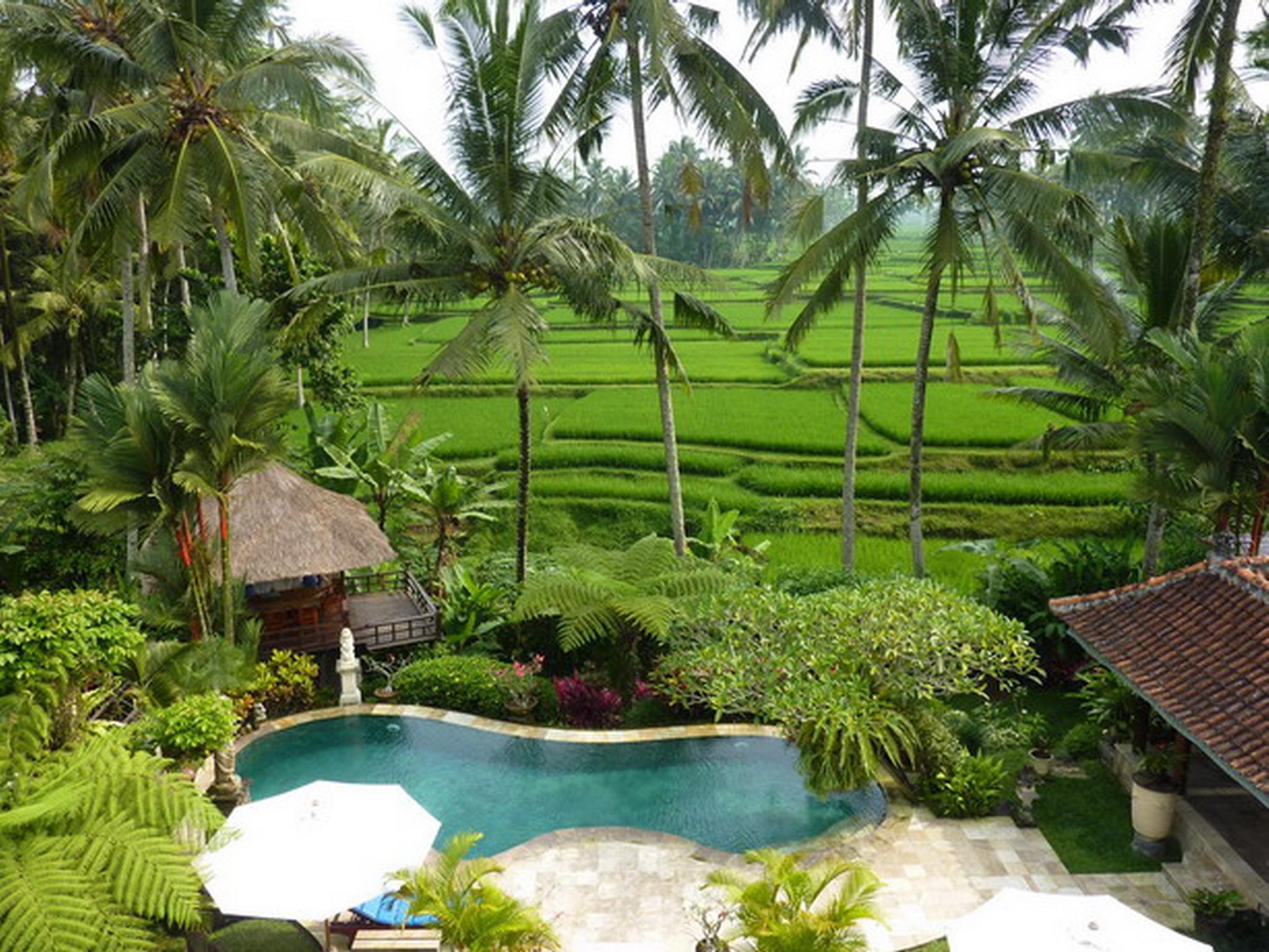 Villa Orchid Bali ホテル詳細